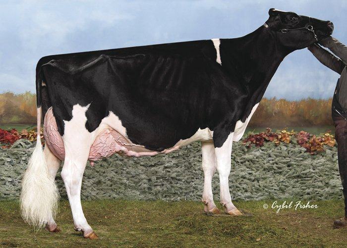 Ms Atwood Madison-ET (VG-88)