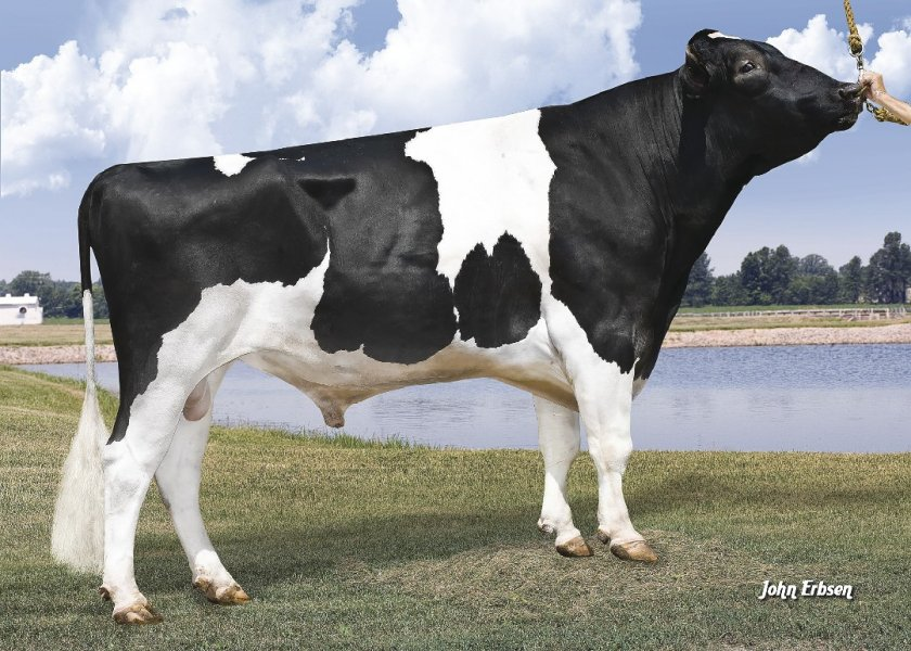 7HO11351 - SUPERSIRE