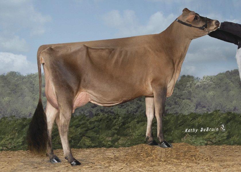 Kash-In Barnabas 45001-ET (VG-89%)