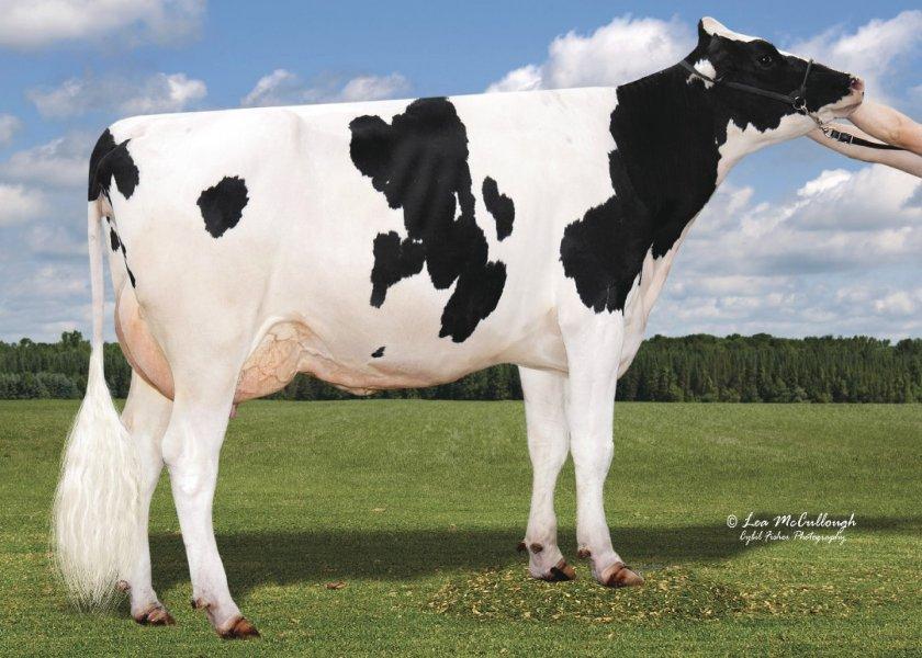 L-L-M-Dairy Butler Dusty-ET (VG-85)