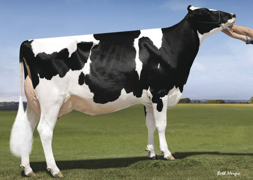 Our-Favorite Unlimited (EX-94-EX-MS)
