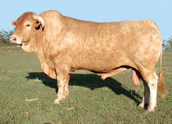 CA22 - CURATIVO da Pantelaria