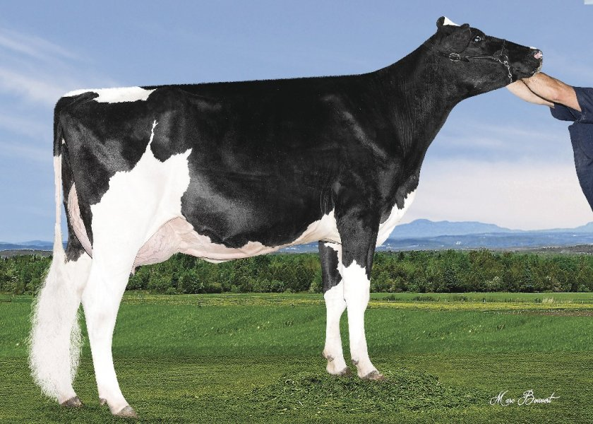Clear-Echo Defender 3177-ET (VG-85)
